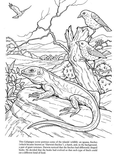 charles darwin coloring book