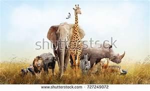 Safari Stock Images, Royalty-Free Images & Vectors ...