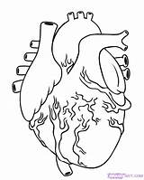 Coloring Pages Organ Organs Human Body Getcolorings Printable sketch template