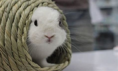 kaninchen in der wohnung kaninchen und hase wo ist der unterschied