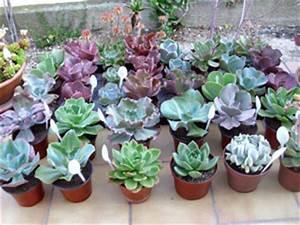 Plantes Grasses Extérieur : echange plantes grasses ~ Dallasstarsshop.com Idées de Décoration