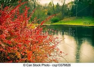 Bäume Umpflanzen Jahreszeit : jahreszeit park see b ume herbst str ucher weinlese landschaftsbild ~ Orissabook.com Haus und Dekorationen