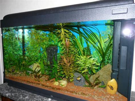 aquarium 20l pas cher