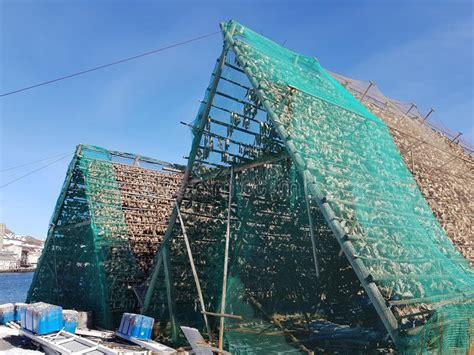 traditional fish drying rack  making stockfish dry fish   arctic circle stock image
