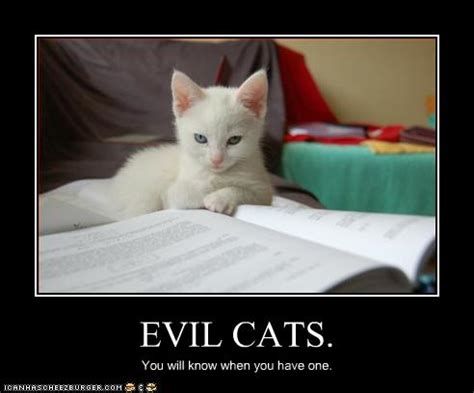 evil cats cheezburger funny memes funny pictures