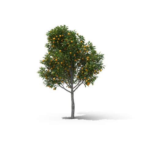 orange tree png images psds   pixelsquid