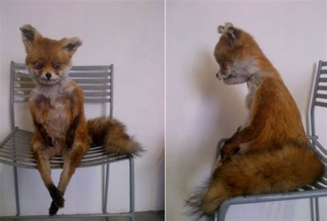 Taxidermy Fox Meme - stoned fox gets a chilly reception in st petersburg as badly stuffed creature is labelled vile