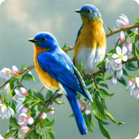 singing birds live wallapaper latest version for free