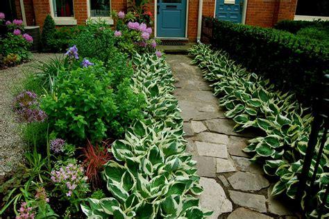 great border plants astrid s garden design good old reliable hostas