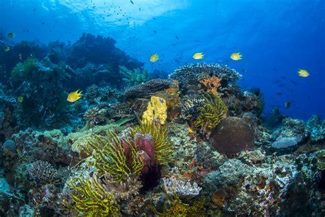 Apo Reef Scene at Apo Island, Philippines by Joe Platko