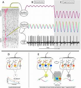 7 An Illustration Of Modes Of Neural Activity With