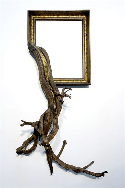 fusion frames  darryl  fuse gnarled tree roots