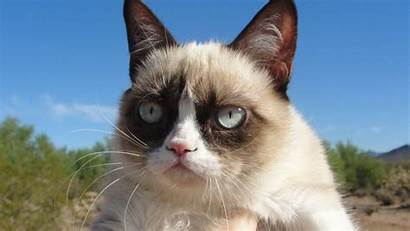 Cat Grumpy Desktop Cool 1366 Wallpaperfx Computer