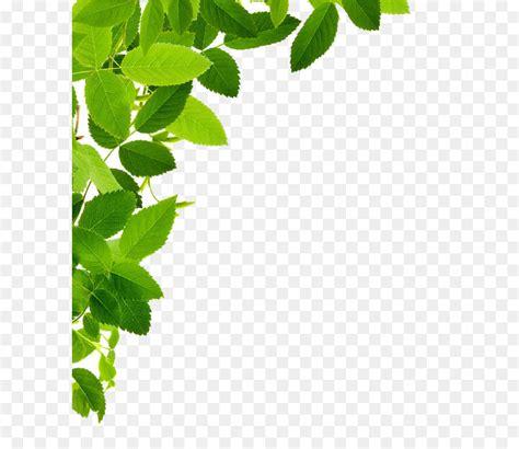 leaf clip art leaves transparent  transprent png