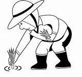 Rice Clipart Plant Planting Paddy Sketch Farm Cultivation Cliparts Farmer Clip Colouring Pages Coloring Library Sketches Paintingvalley Clipground sketch template