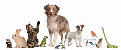 Pets Pet Together Background Arizona