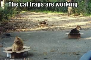 trap cat how to make an effective cat trap evan s