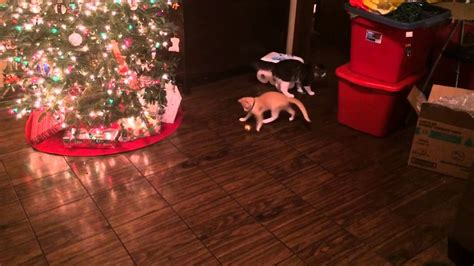 cat first seen christmas tree cats seeing a tree for the time