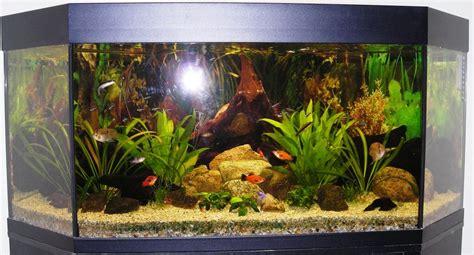6 hoekig aquarium mitt 270l juwel h 246 rnakvarium sa med en touch av asien