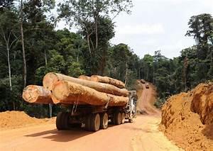 Exploitation Forestire Une Application Informatique Pour