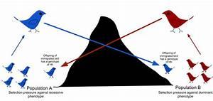 Alternatorponents Diagram