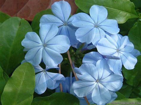 light blue flowers light blue flower wallpaper wallpapersafari