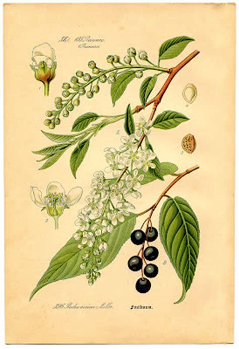 instant art printable floral botanical   graphics