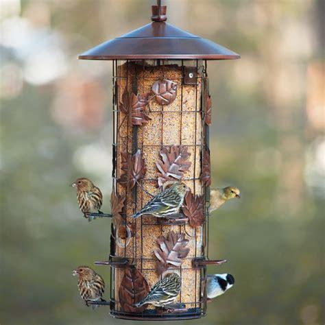 bird feeder types 50 plus world