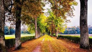Trees, Lined, Road, Hd, Wallpapers, Desktop, And, Mobile, Images, U0026, Photos