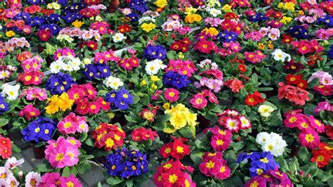 Welche Blumen Vertragen Viel Sonne by Pflanzen F 252 R Den Fr 252 Hlings Balkon Welche Blumen K 246 Nnen