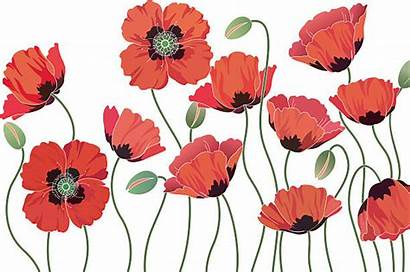 Poppies Illustration Remembrance Clip Sunday Illustrations Royalty