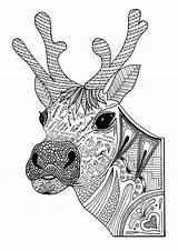 Coloring Adult Christmas Reindeer Pages sketch template
