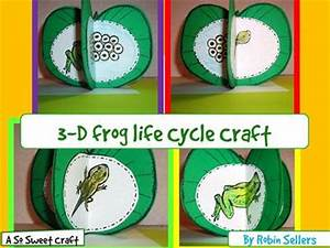 Frog Life Cycle Craft: 3-D Life Cycle of Frogs Craftivity