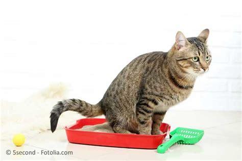 tun bei unsauberkeit von katzen die besten tipps