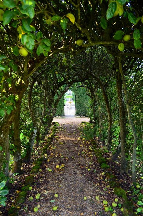 pathway trees arched apple tree path stock photos image 34192843