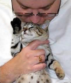 Savannah Kitten Selectexotics Sandy Spots Of Foothill