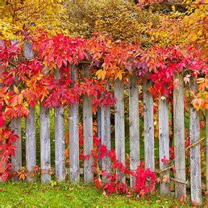Garten Im Herbst by Gartenkalender Pflanzkalender Gartentipps