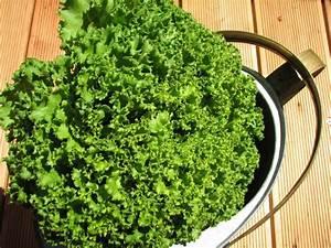 Endiviensalat Pflanzen Setzen : endivie cichorium endivia ~ Whattoseeinmadrid.com Haus und Dekorationen