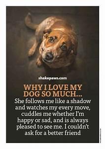 miss my dog