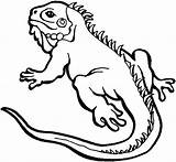 Lizard Coloring Iguana Pages Drawing Reptiles Drawings Easy Alpha Male Colouring Printable Colornimbus Sheets Neck Cute Getdrawings Frilled Sketch Cartoon sketch template