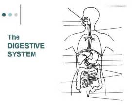 Digestive System Diagram Unlabeled