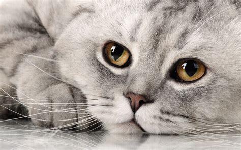 stiftung warentest prueft katzen nassfutter  test