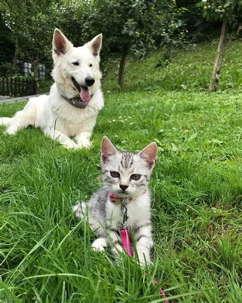 cats dogs better than why pets reasons