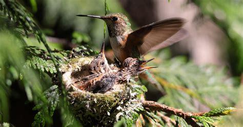 birding activity   nesting ball