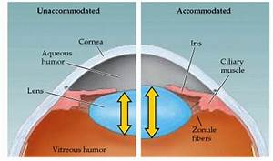The Ciliary Pop: A Simple Trick For Healthy Eyes ...
