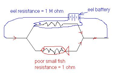 electricity why don t electric fish shock themselves physics stack exchange