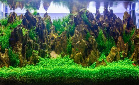 Aquarium Dekorieren Ideen aquarium dekoration 187 sch 246 ne ideen tipps tricks