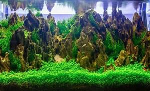 Aquarium Einrichten Beispiele : aquarium dekoration sch ne ideen tipps tricks ~ Frokenaadalensverden.com Haus und Dekorationen