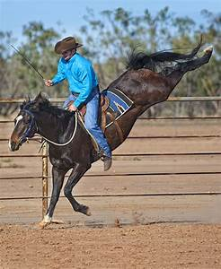 Lack of Groundwork Results in Bucking, How to Fix It - by ...