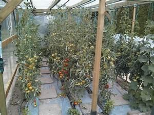 Abri A Tomate : mon abri tomate page 3 semences ~ Premium-room.com Idées de Décoration